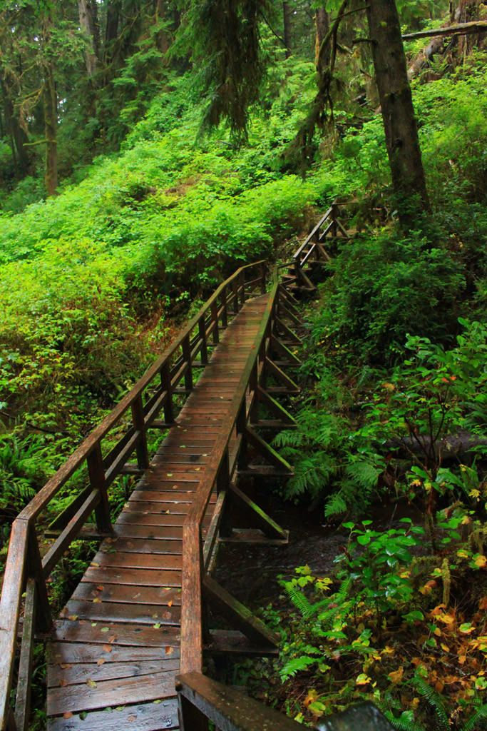 The Schooner Cove hiking trail in Pacific Rim National Park is a 2km route that leads through lush rainforests before reaching a Pacific Ocean beach with incredible rocky outcrops.
