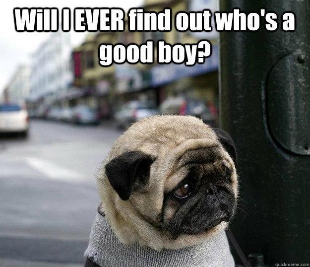 A Sad Looking Puppy