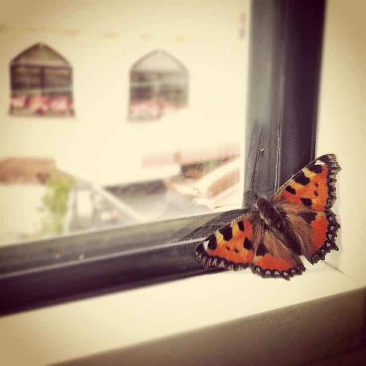 Schmetterling zu Besuch...