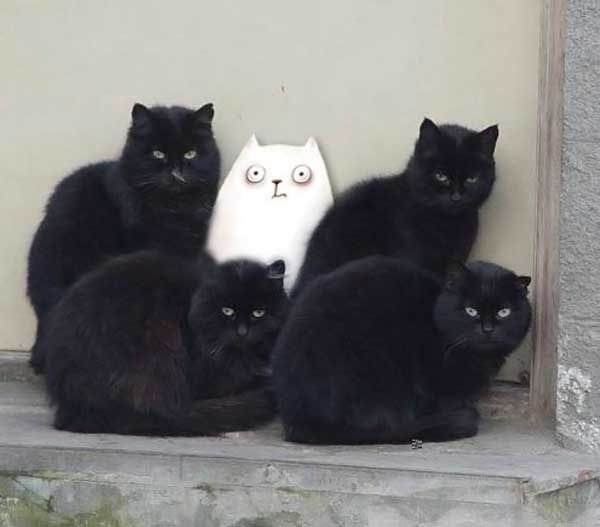 who datBlack Kitty, Funny Pictures, Funny Cat, Simon Cat, Funny Animal, Black Cat, Ninjas Recipe, Cat Photos, White Cat