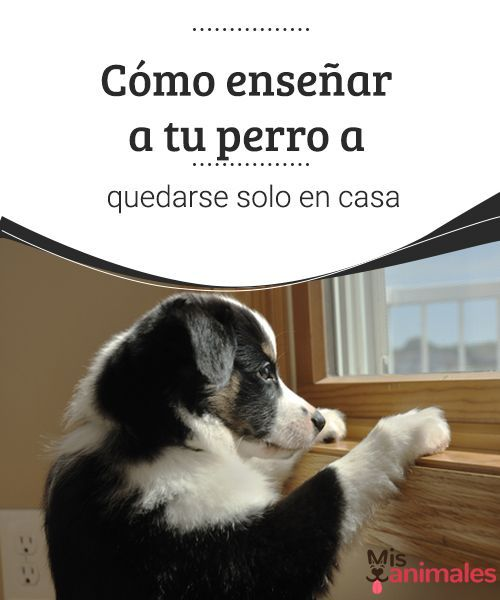 Cómo enseñar a tu perro a quedarse solo en casa  Los perros necesitan atención, pero también deben aprender a estar solos. Aquí te damos unos trucos para enseñar a tu perro a quedarse solo en casa.