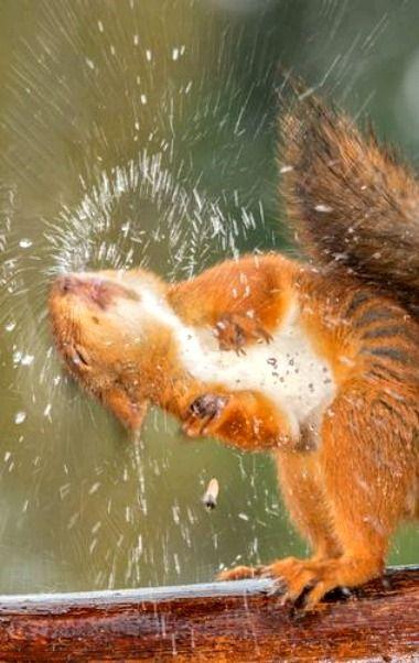"Squirrel: ""SO Refreshing!""                                                                                                                                                      More"