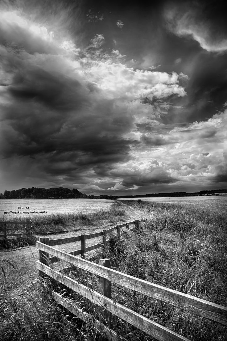 My latest image on my website. Barley Field , Dornoch,Scotland. www.geoffreyskerrattphotography.com