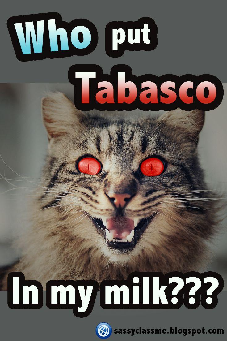 Top 10 funniest Cat Memes 😺 quotes memes cat funny