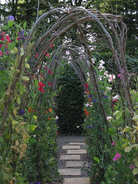 garden pathGardens Ideas, Secret Gardens, Arbors, Gardens Paths, Arches, Peas Trellis, Sweets Peas, Sweet Peas, Branches