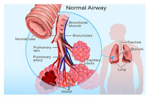 Allergies and Asthma Symptoms ** You can get more details by clicking on the image.