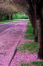 Come lets take a walk