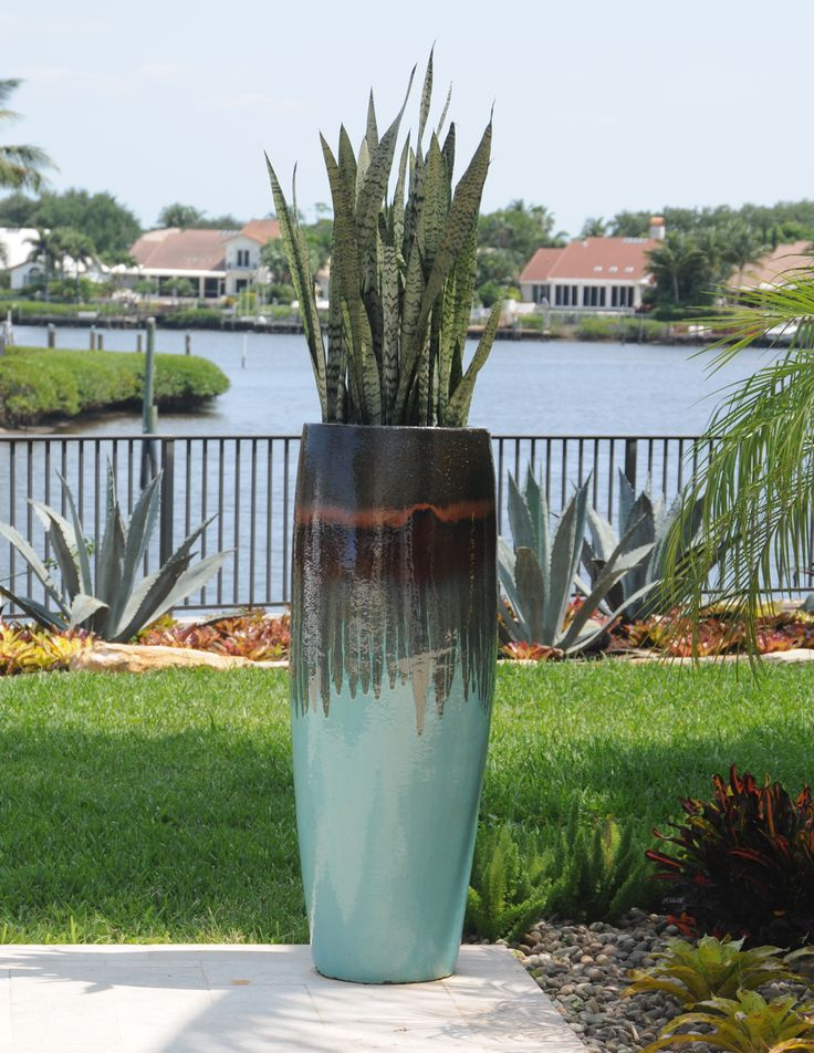 Snake plants grace this lovely glazed planter