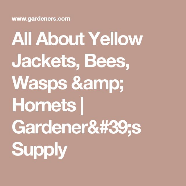 All About Yellow Jackets, Bees, Wasps & Hornets   Gardener's Supply