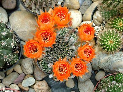 Kaktusz: szeptember 2007