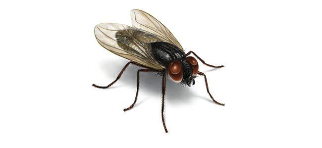 In het kamp waren er heel veel vliegen , Jeroen probeerde deze altijd te doden. Toen zijn grootmoeder stierf probeerde Jeroen al de vliegen die in de buurt van zijn grootmoeder te doden.