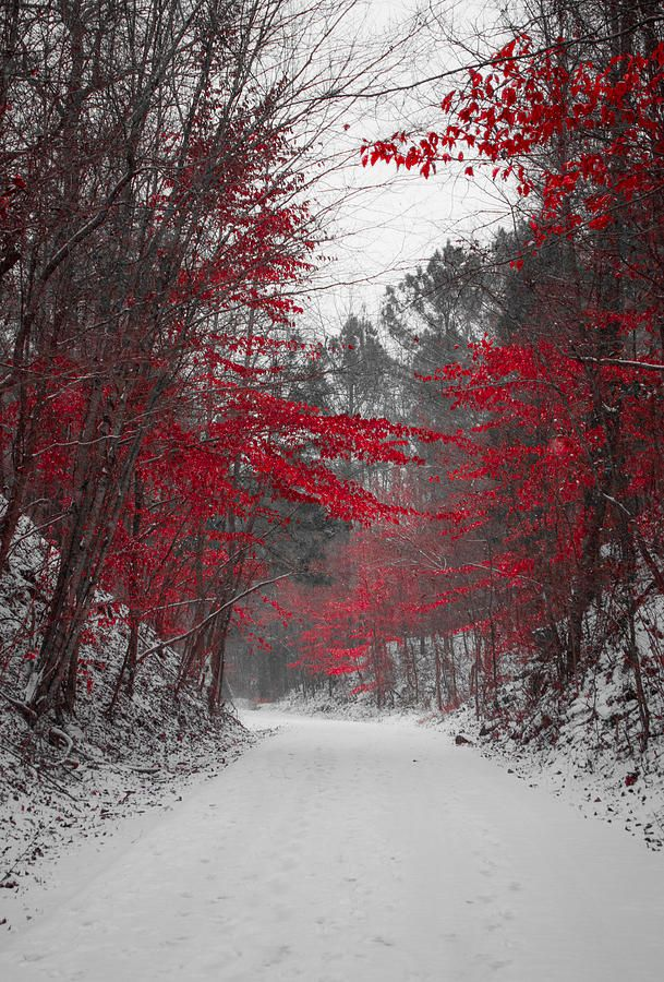 ~~Red Blossoms | mega snowstorm in Birmingham, Alabama by Parker Cunningham~~