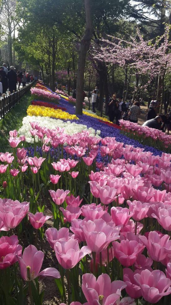 Emirgan Park - Estambul - Opiniones de Emirgan Park - TripAdvisor