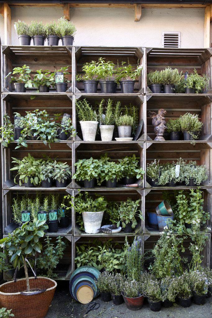 Estantería terraza para plantas aromáticas con cajas de frutas recicladas