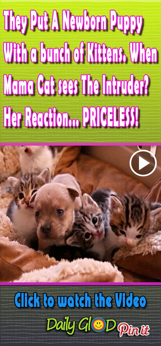 They Put A Newborn Puppy With a bunch of Kittens. When