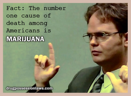 43 Best Marijuana Humor Images On Pinterest