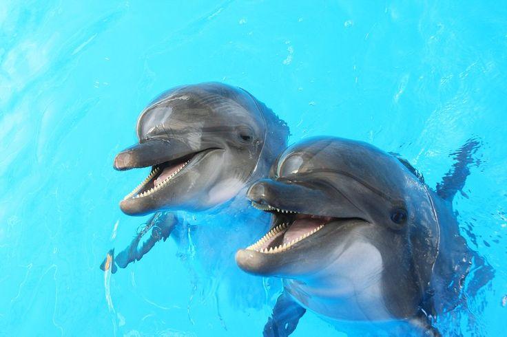 דולפינים קוראים זה לזה בשם