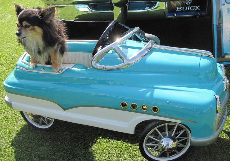 chihuahua op een blauwe auto wallpaper - ForWallpaper.com