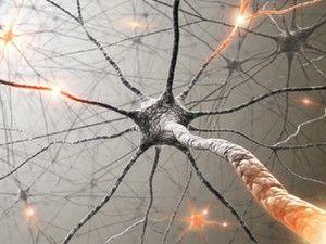 Neurônios são renovados regularmente no cérebro ao longo da vida, diz estudo - http://revistaepoca.globo.com//Ciencia-e-tecnologia/noticia/2013/06/neuronios-sao-renovados-regularmente-no-cerebro-ao-longo-da-vida-diz-estudo.html (Foto: ShutterStock)