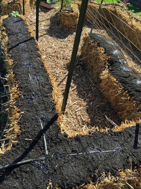 Straw Bale Gardening - Planting Seeds. #garden #dan330 http://livedan330.com/2015/05/27/how-to-seed-a-straw-bale-garden/