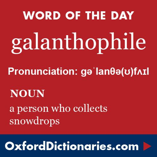 7240+ best Word of the Day images on Pinterest English, English