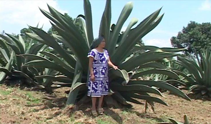#MahCualliOhtli desea #Quetevayabien consume productos del #árboldelasmaravillas ,  #LoQueAmoDeMéxico