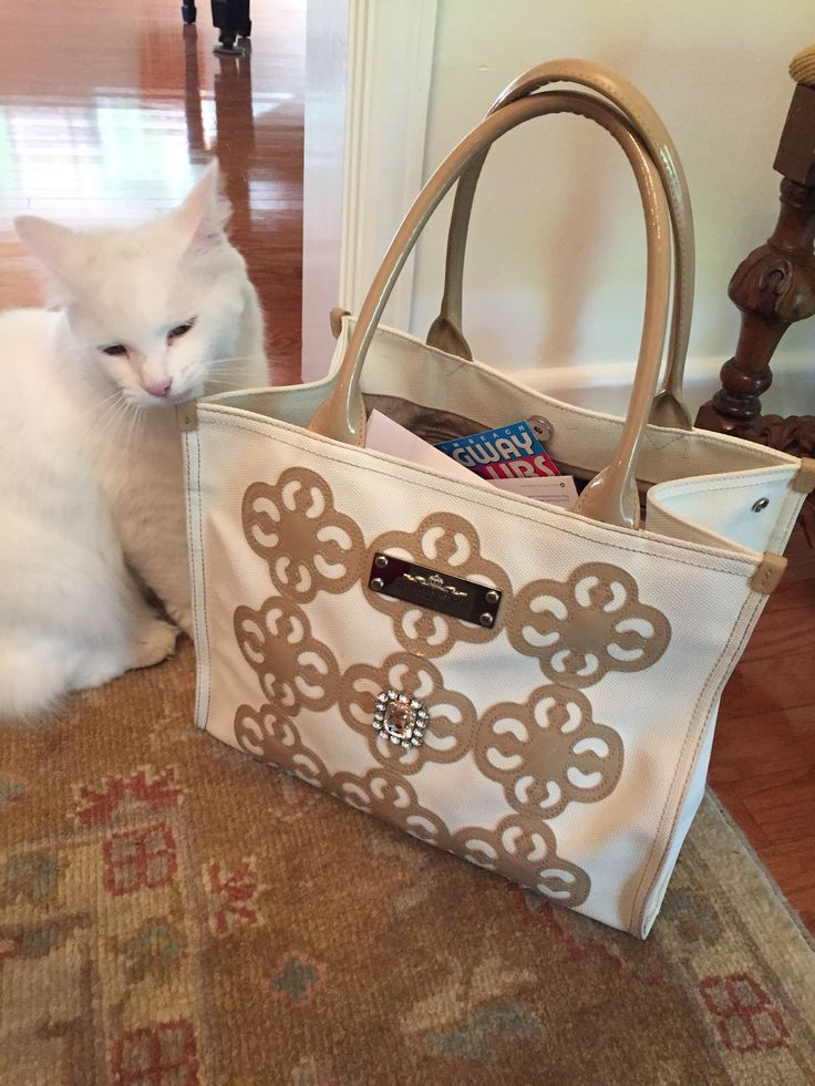 It's every female's favorite purse.  My Flat In London purse, bought at Brighton in Indy!  Here is Griffin, the feral cat who was rescued and now lives in Palm Beach, FL.  She has good taste!