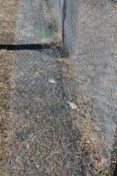 Blog - Building a snake proof fence