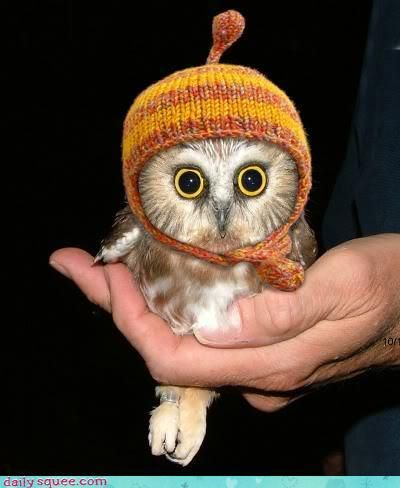 o.m.g. baby owl in a knitted cap.