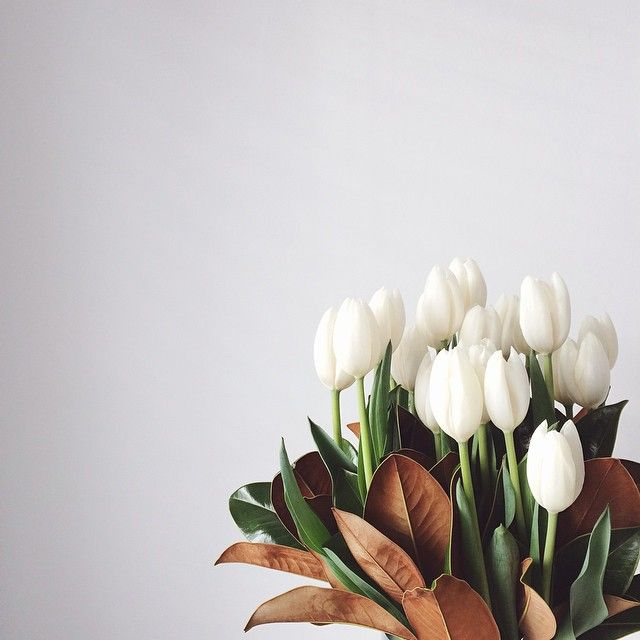white tulips and magnolia leaves