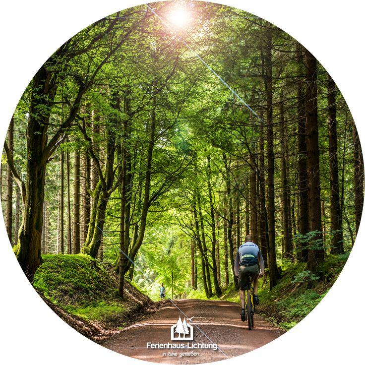 Feine Tourentipps für das Bikeparadies Thüringer Wald erhalten Sie bei uns gratis #wald #thüringen #rennsteig #mountainbike #enduro #downhill #mtb #bikes #toptags #kurzurlaub #laufen #wandern #ferienhauslichtung #natur #house #urlaub #BikeparadiesThüringerWald #bikeparadise #sport #fahrrad #bike #fahrradtour #forest #outdoors #magic #thuringia #explore #travel