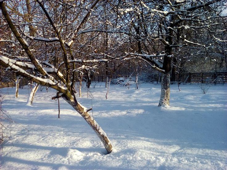 Zima w Polsce/Winter in Poland, Natura 15 273 (autor: jlez)