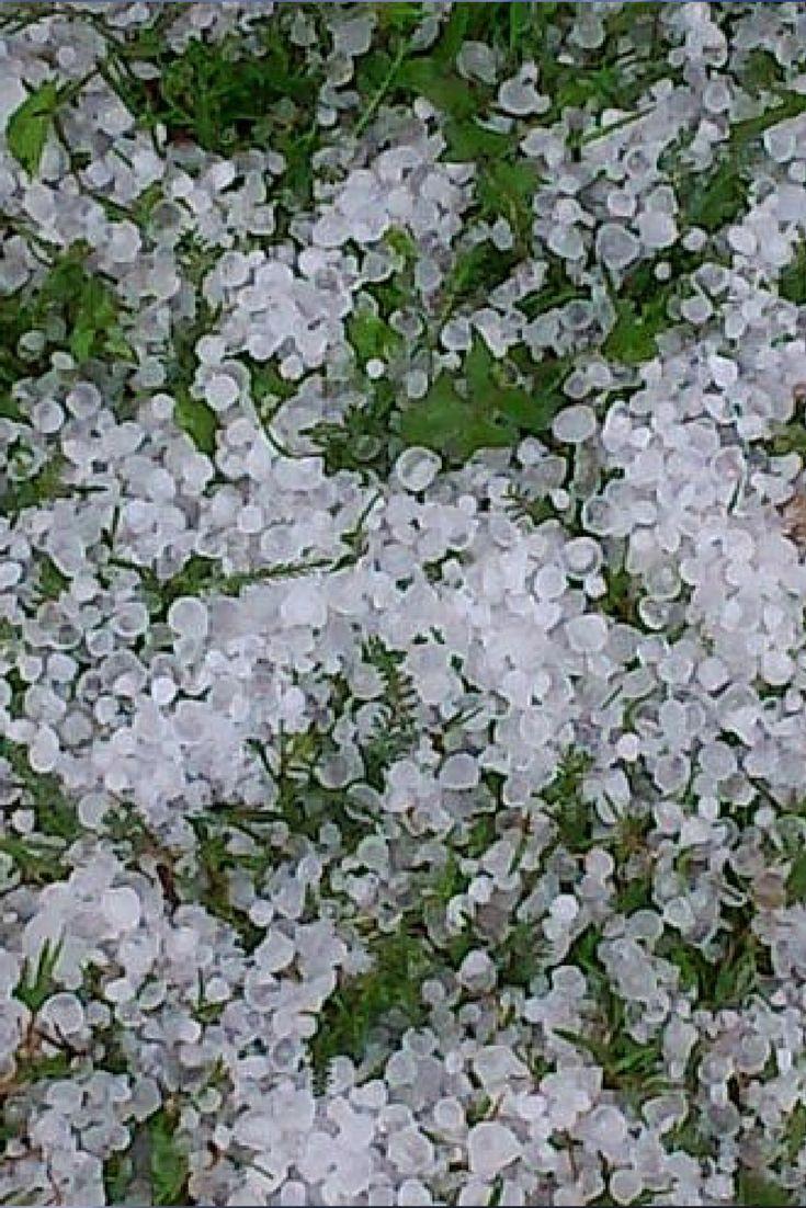 """""""Gradobicie, ulewa, wiatr i burza"""". Niespokojna sobota na Waszych zdjęciach. http://kontakt24.tvn24.pl/najnowsze/gradobicie-ulewa-wiatr-i-burza-niespokojna-sobota-na-waszych-zdjeciach,174087.html"""