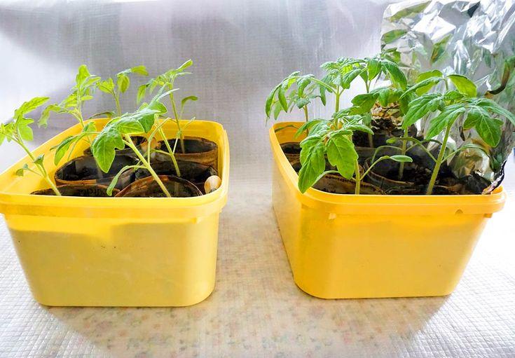 Dyrker du grønnsaker eller vil du at en plante skal vokse raskere? Da burde du teste ut denne metoden.