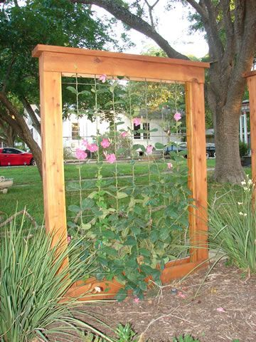 Could be used for natural privacy fencing, trellis, outdoor screen | followpics.co