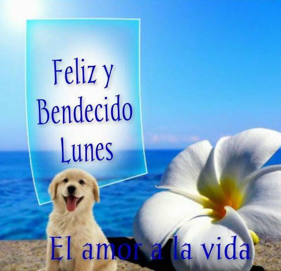 Lunes imagen #8786 - Feliz y Bendecido Lunes Tags: Cachorro, Flor, Mar, Playa. Imágenes y fotos de 'Lunes' con frases para facebook, whatsapp y twitter.