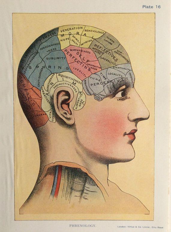 Phrenology 1920s Vintage Head Color Print Psychoanalysis Medical Diagnostics Brain Illustration