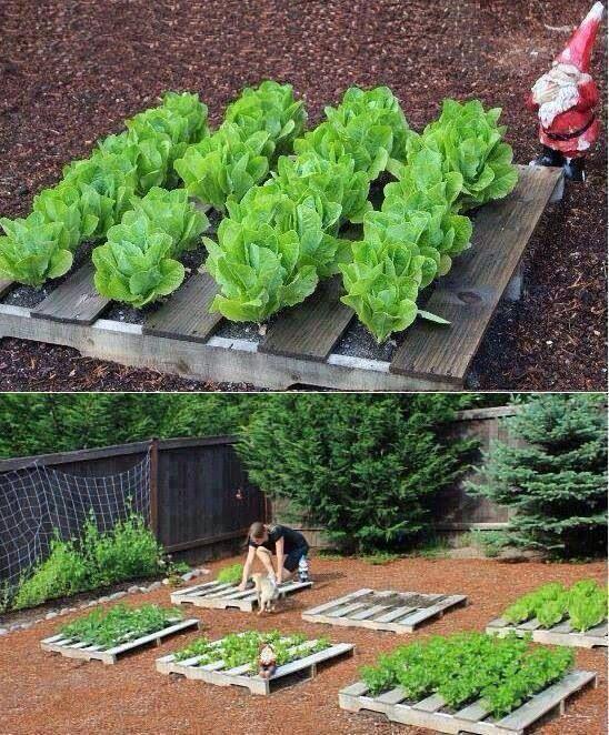 Ook met een oude pallet kan je aan de slag. De ruimte tussen de verschillende planten is ideaal om bv. sla te planten of radijsjes te zaaien.
