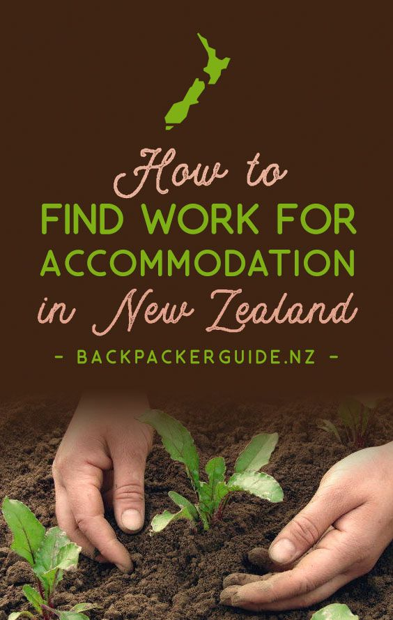 How to Find Work for Accommodation in New Zealand | Nueva