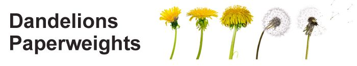 To make a dandelion puff paperweight, follow these 6 steps.   Step 1 - Gather the following ingredients         Step 2 - Mix the resin and catalyst