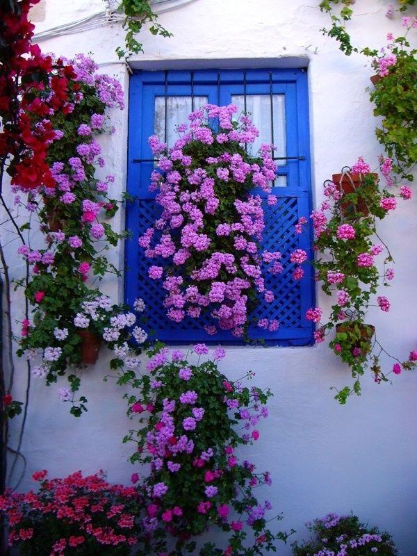 Les 86 meilleures images du tableau des fleurs aux for Mettre des barreaux aux fenetres