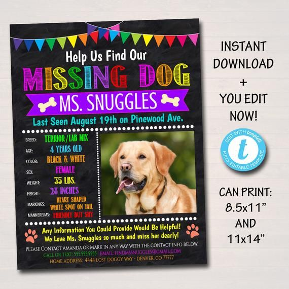 Editable Missing Dog Flyer And Poster Template Printable Lost Etsy In 2021 Losing A Dog Losing A Pet Flyer