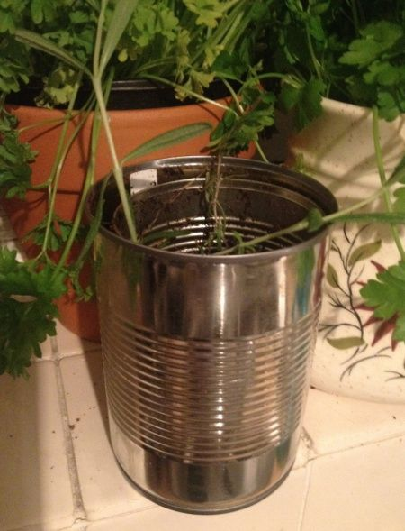 Herbs in tins