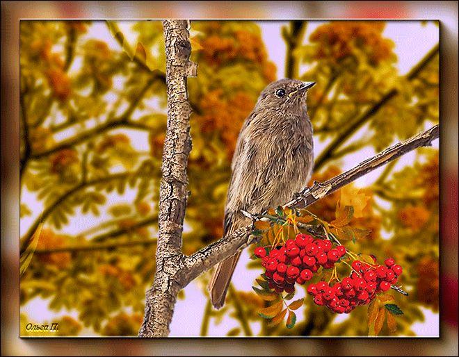 Удачного осеннего дня и хорошего настроения картинки, днем
