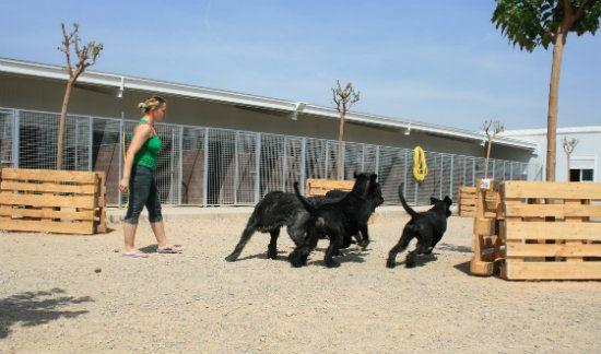 Residencia canina de Pichera, deja tu perro a buen cuidado | DolceCity.com