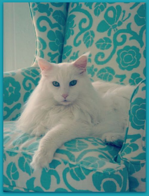 White Cat Turquoise Chair
