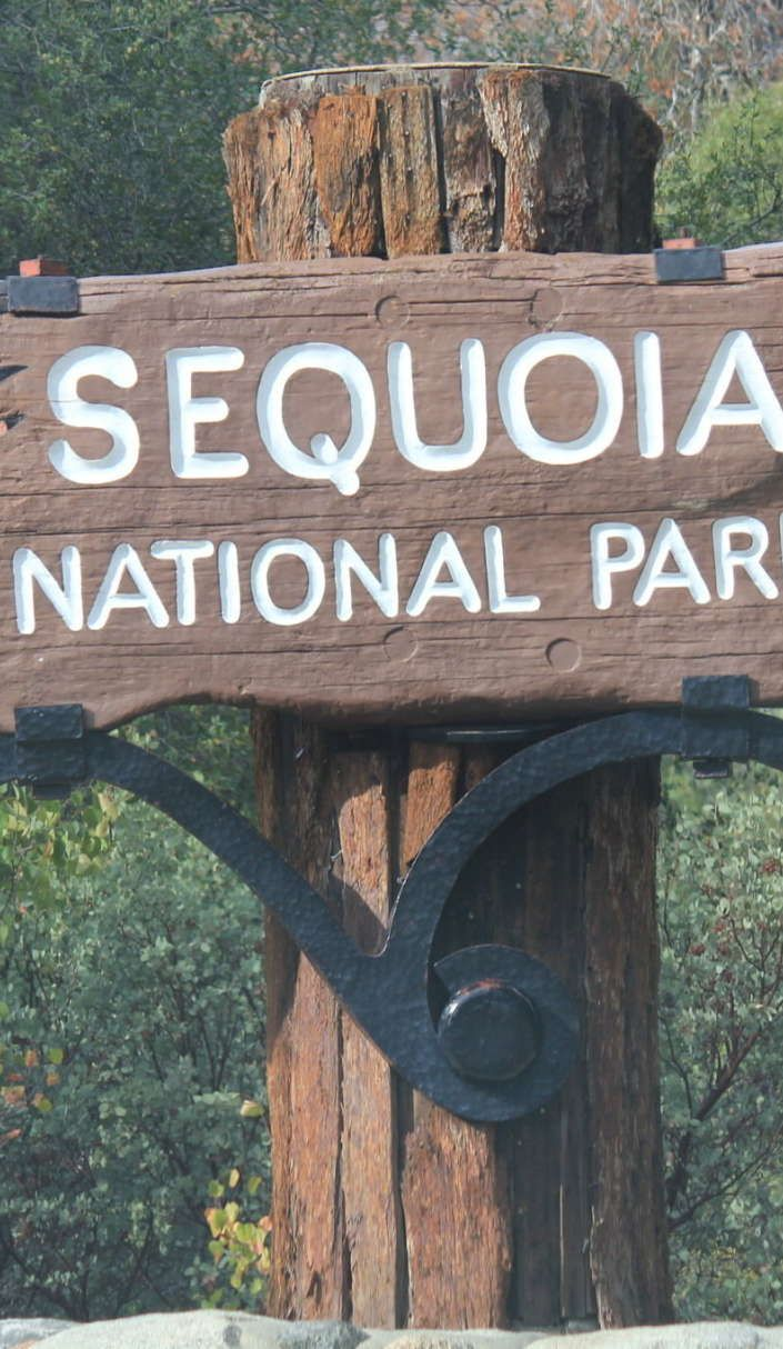 11 Reasons why you MUST Visit Sequoia