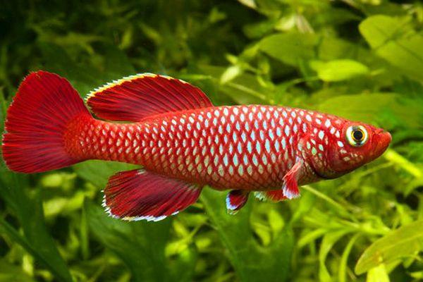 17 Most Popular Freshwater Fish 1 Freshwater Fish Tropical Freshwater Fish Tropical Fish