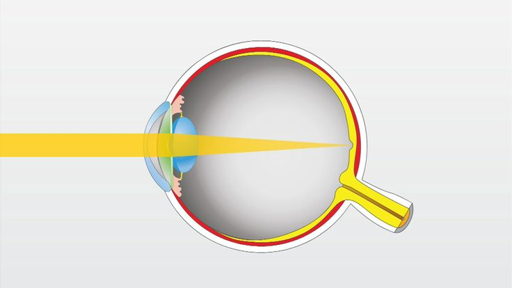 VIDEO CLIP (2 minutes): How the eye works