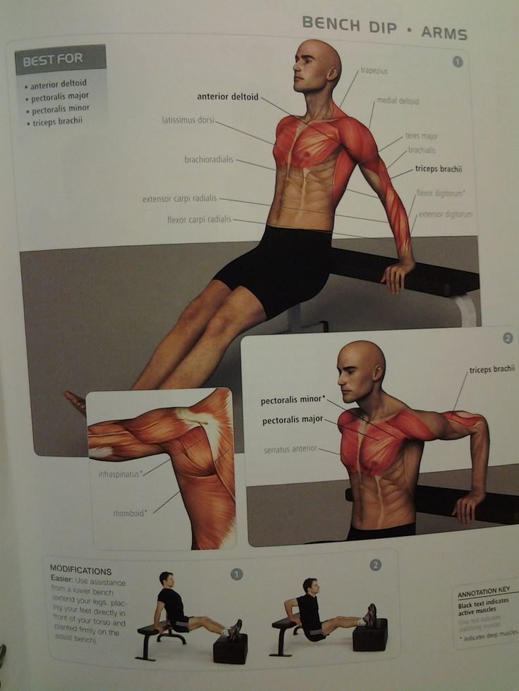 Arms bench dip anterior deltoid triceps brachii for Plank muscles worked diagram